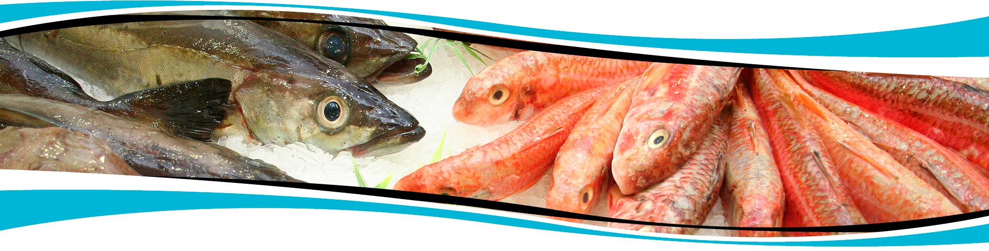 Pescados Rubén Venta De Pescado Congelado Elaborado Y Fresco
